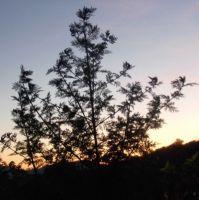 Artemisia_Balkon_Sonnenuntergang1